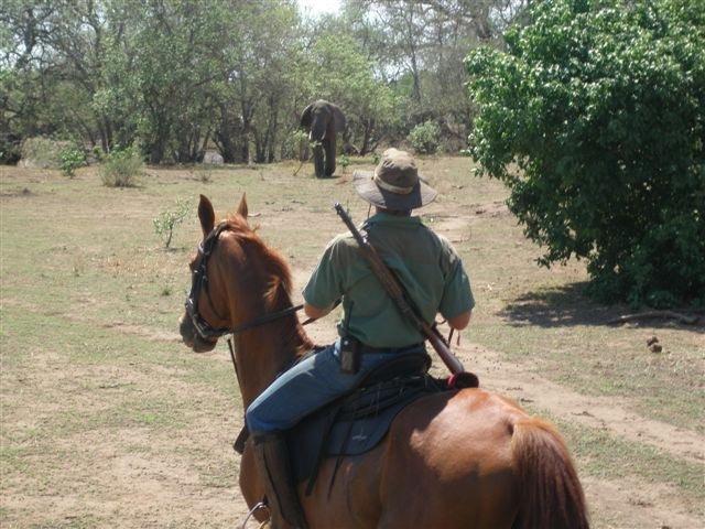 Safari te paard in Zuid Afrika én Botswana / African Explorer - Vakantie te paard / Reisbureau Perlan