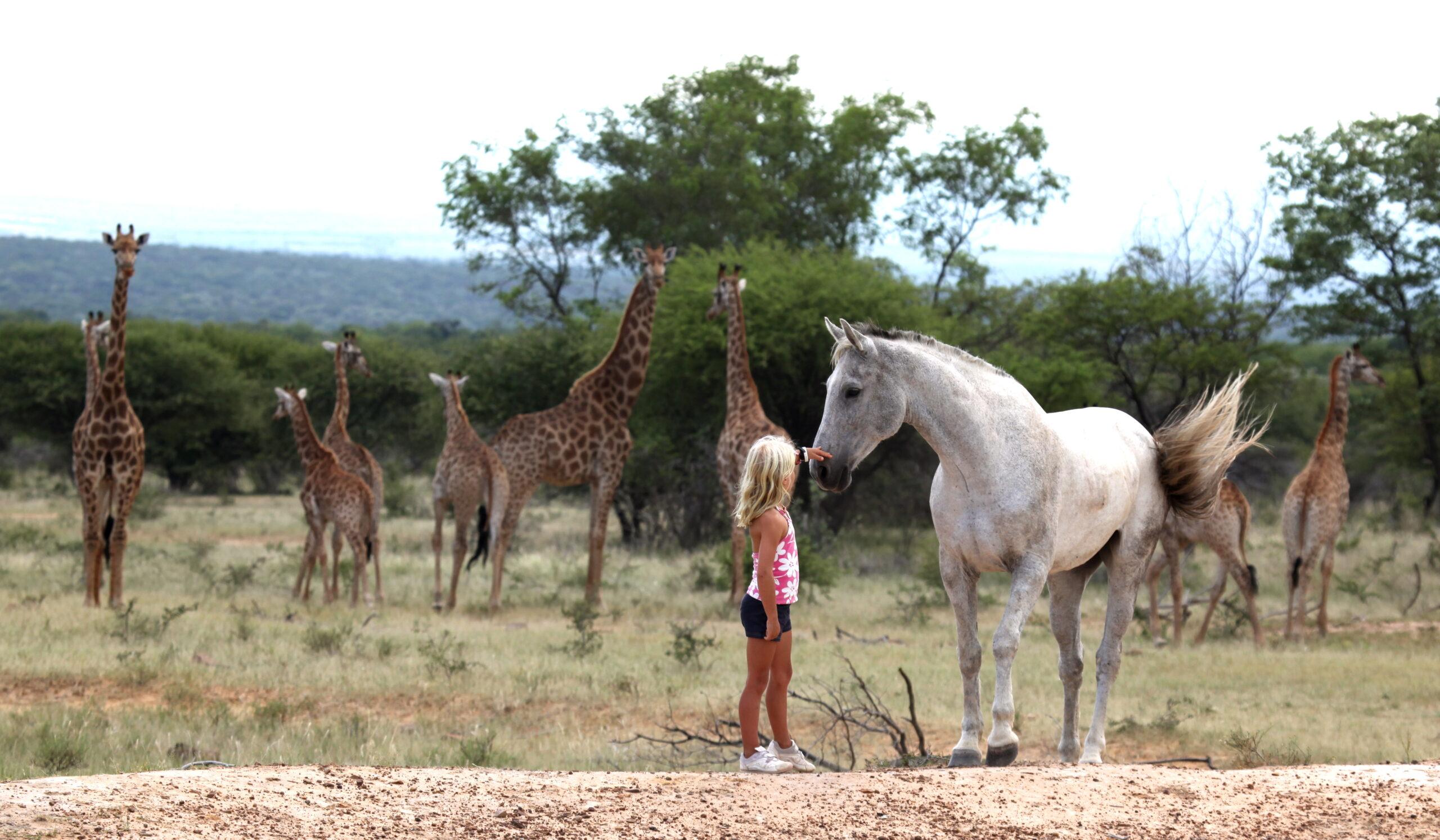 Safari te paard in Ants Lodges / Zuid Afrika - Vakantie te paard / Reisbureau Perlan