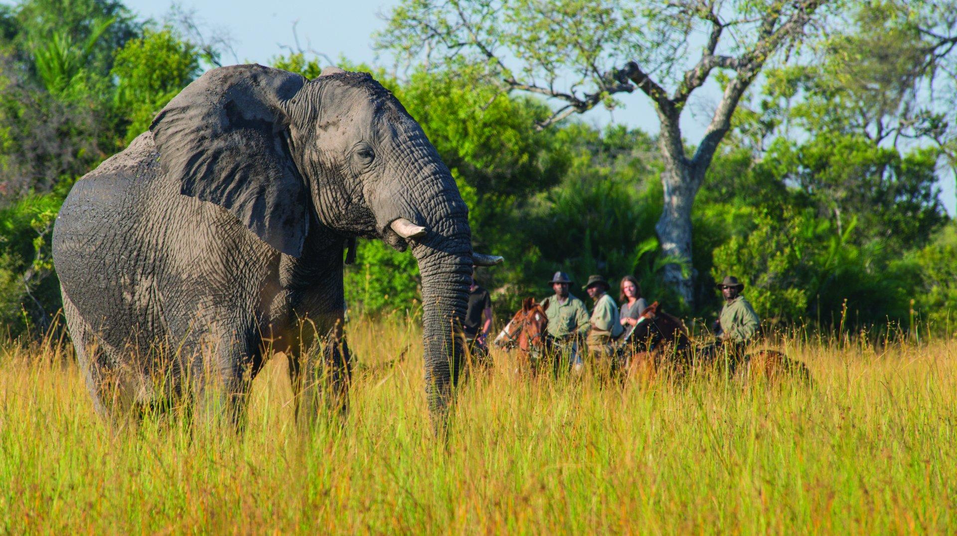 Safari te paard in Macatoo Camp / Botswana - Vakantie te paard / Reisbureau Perla