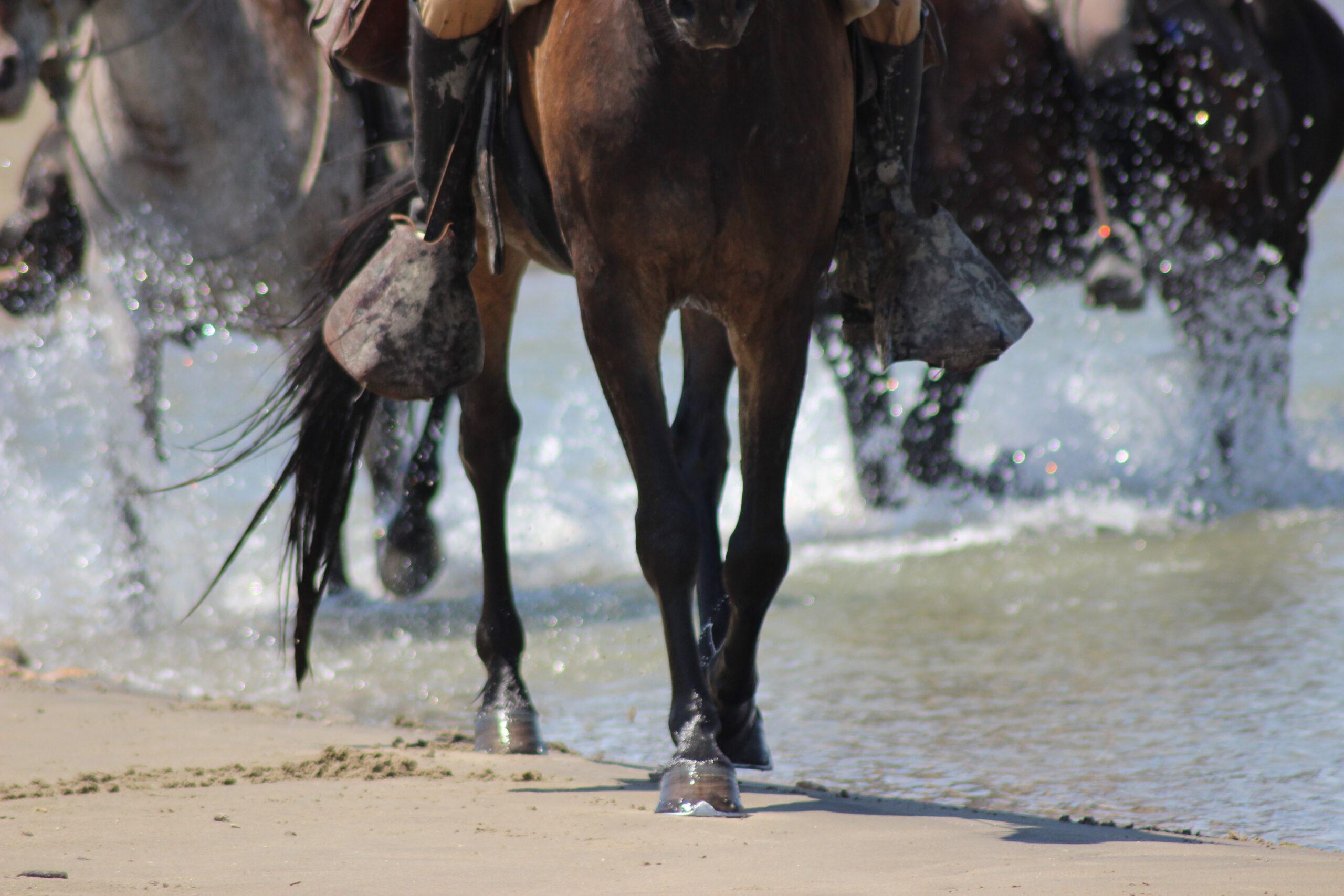 Ruitervakantie in de Provence - Vakantie te paard / Reisbureau Perlan