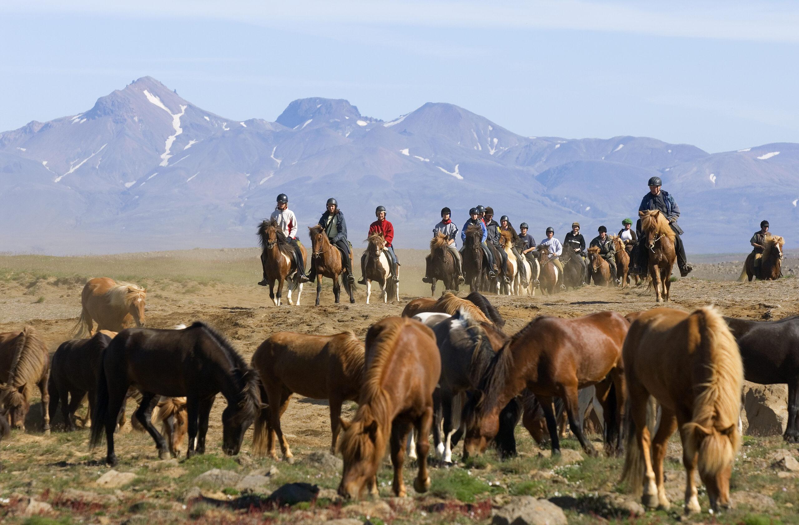 IJslandse paarden in het land van vuur en ijs - Vakantie te paard / Reisbureau Perlan