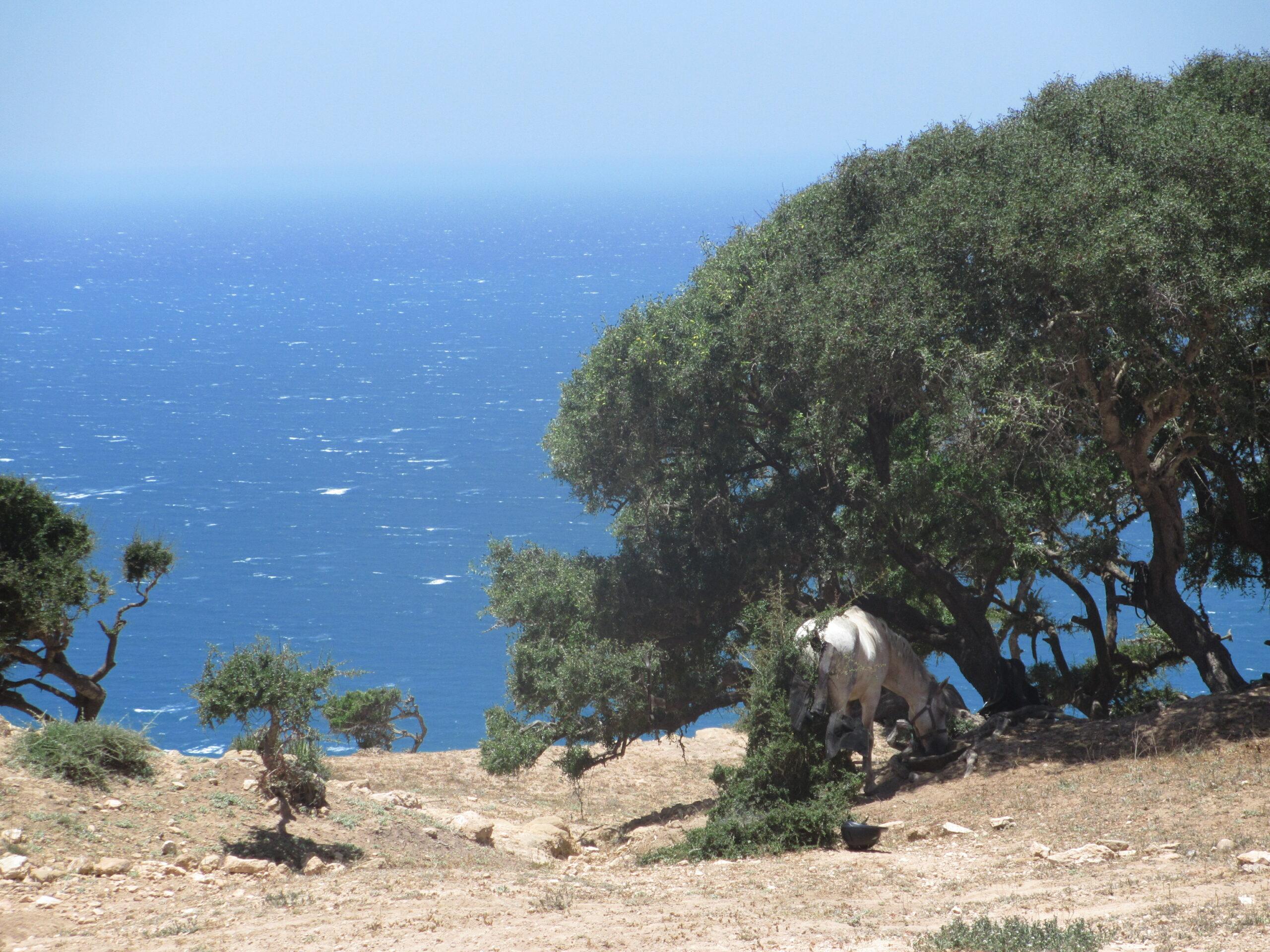 Paardrijden in Marokko - Vakantie te paard / Reisbureau Perlan