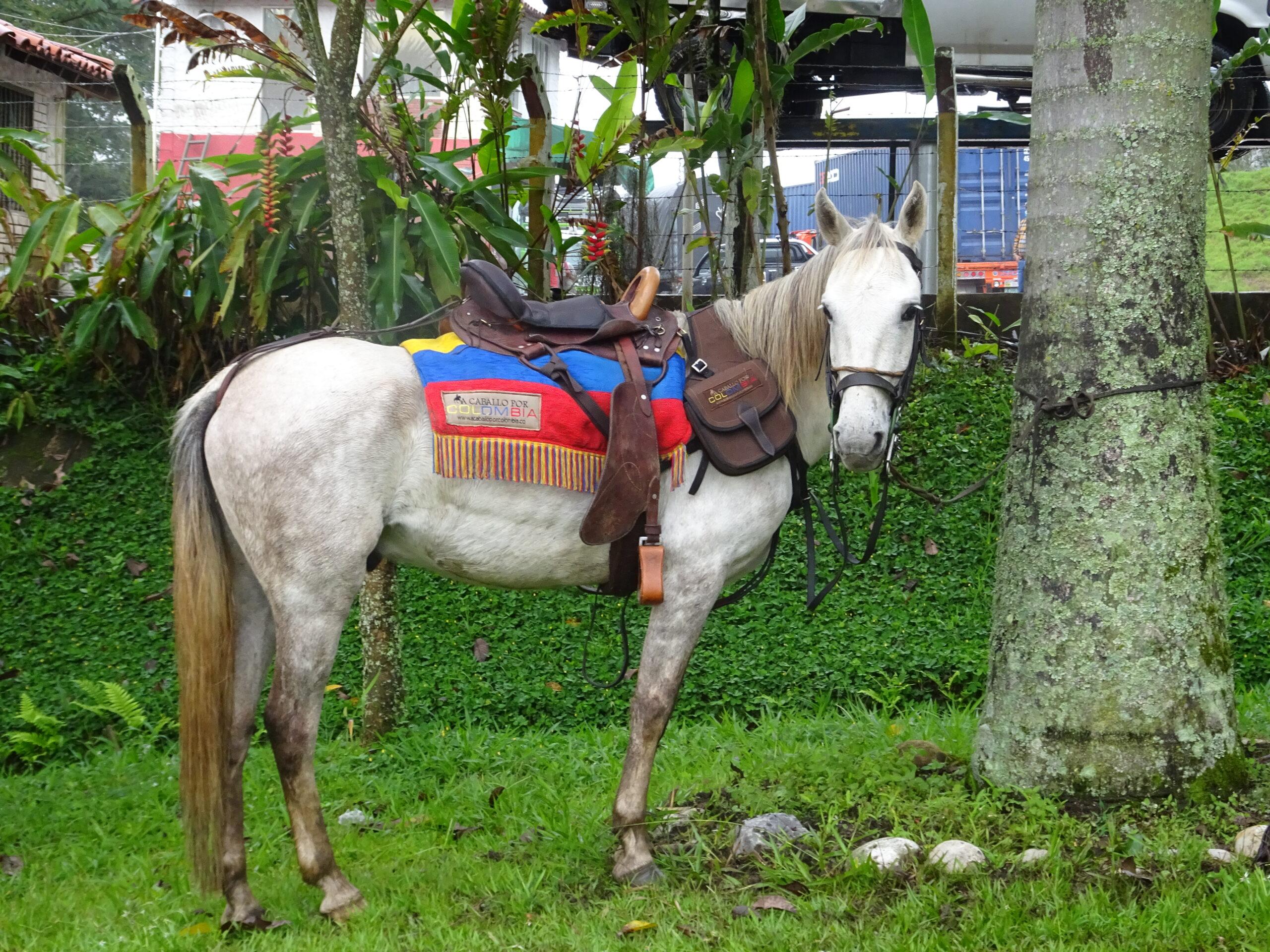 Traditie in Colombia - Vakantie te paard / Reisbureau Perlan