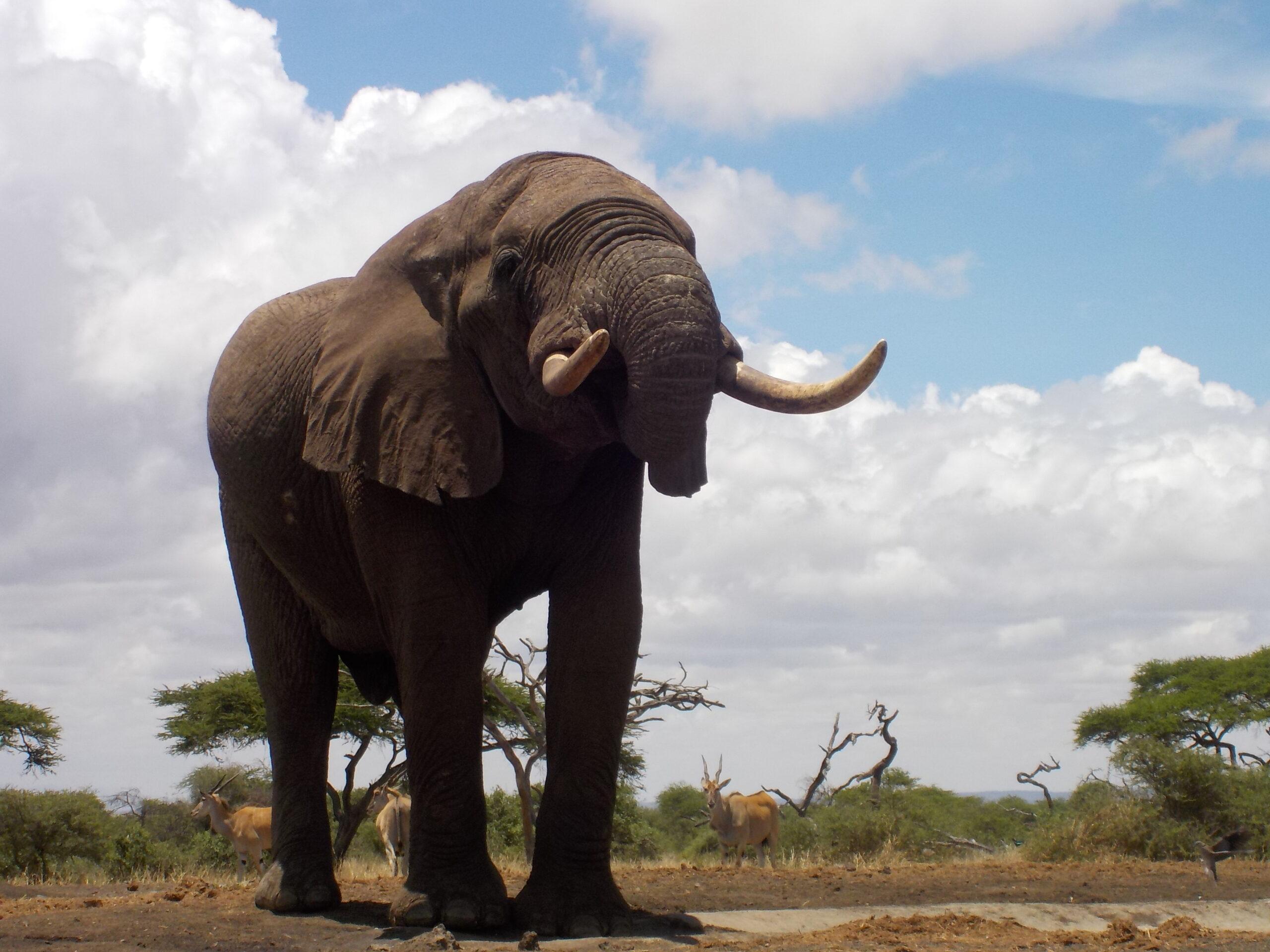 Safari te paard in Ol Donyo / Kenia - Vakantie te paard / Reisbureau Perlan