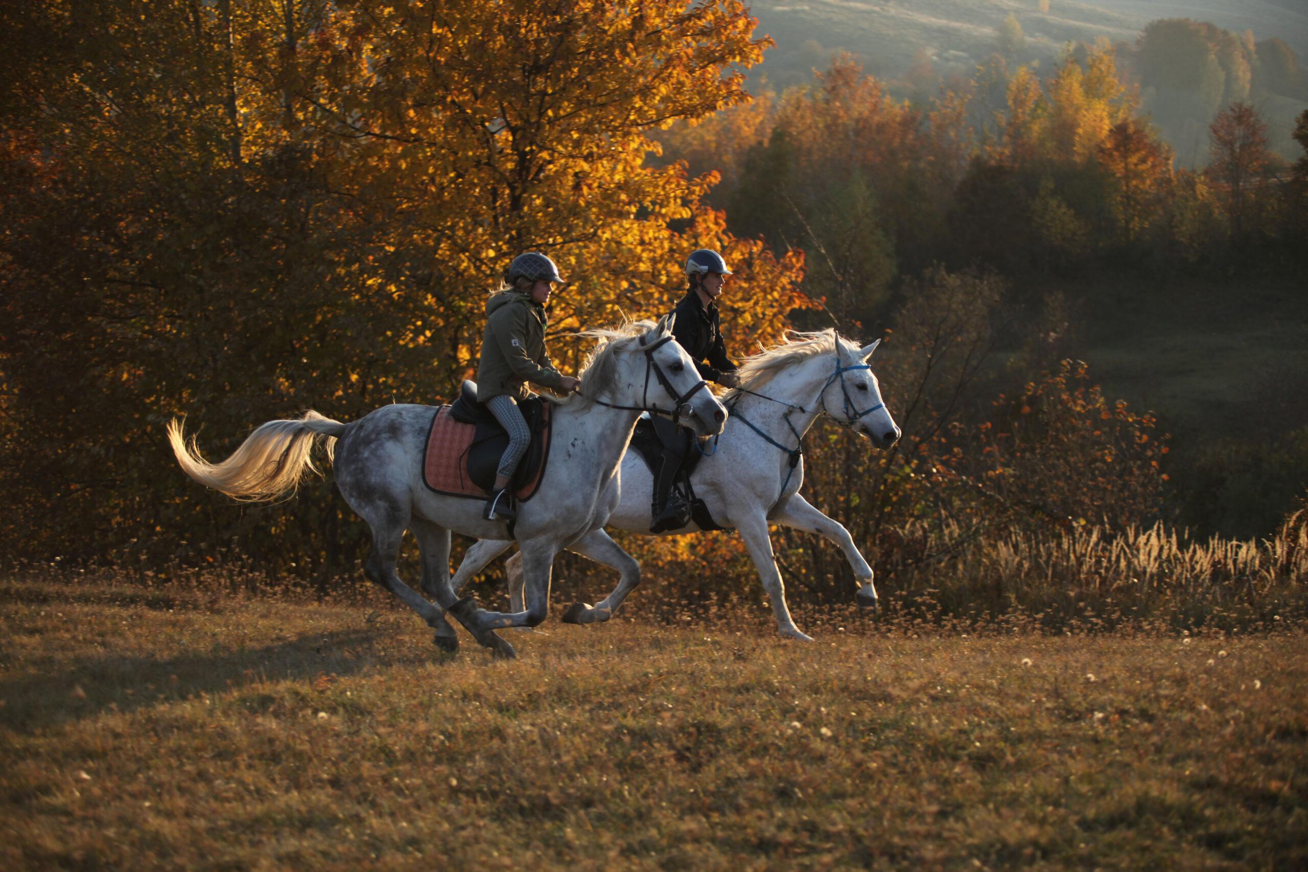 Paardrijden in en rond de Karpaten (Roemenië) - Vakantie te paard / Reisbureau Perlan