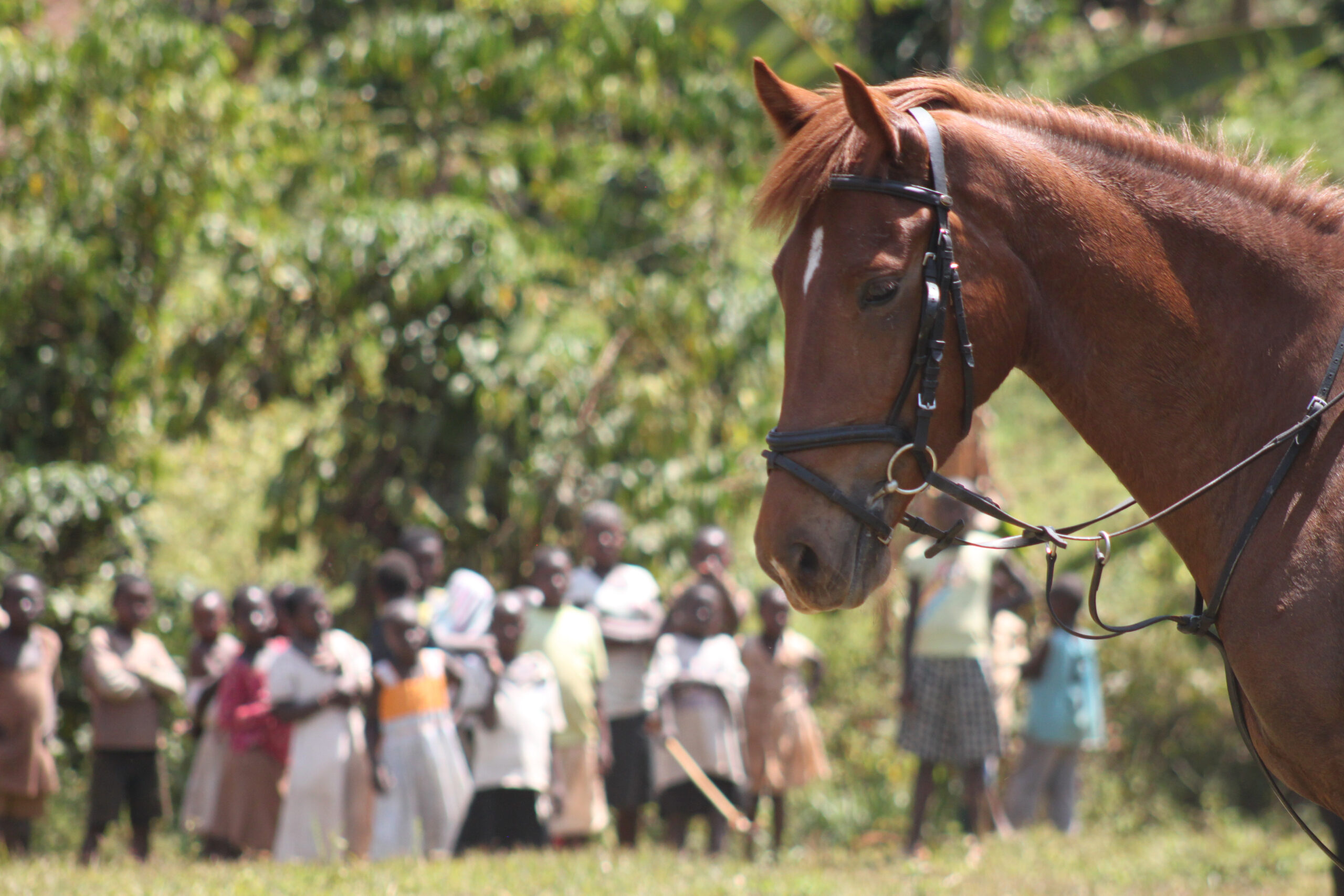 Paardrijden langs de Nijl in Uganda - Vakantie te paard / Reisbureau Perlan