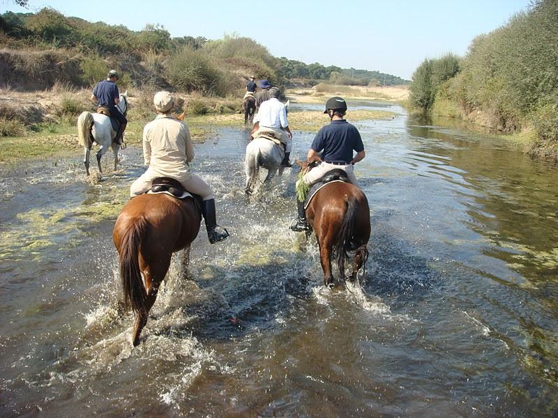 Dressuurstage in Monte Velho / Portugal - Vakantie te paard / Reisbureau Perlan