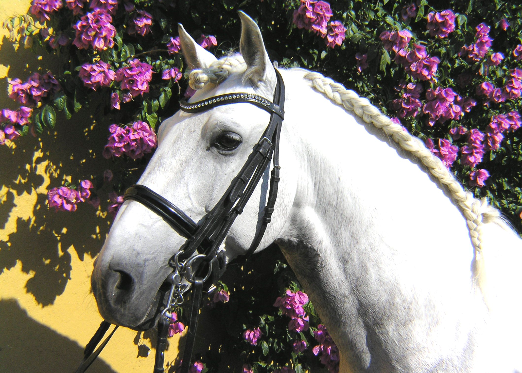 Dressuurstage in Alcainca / Portugal - Vakantie te paard / Reisbureau Perlan