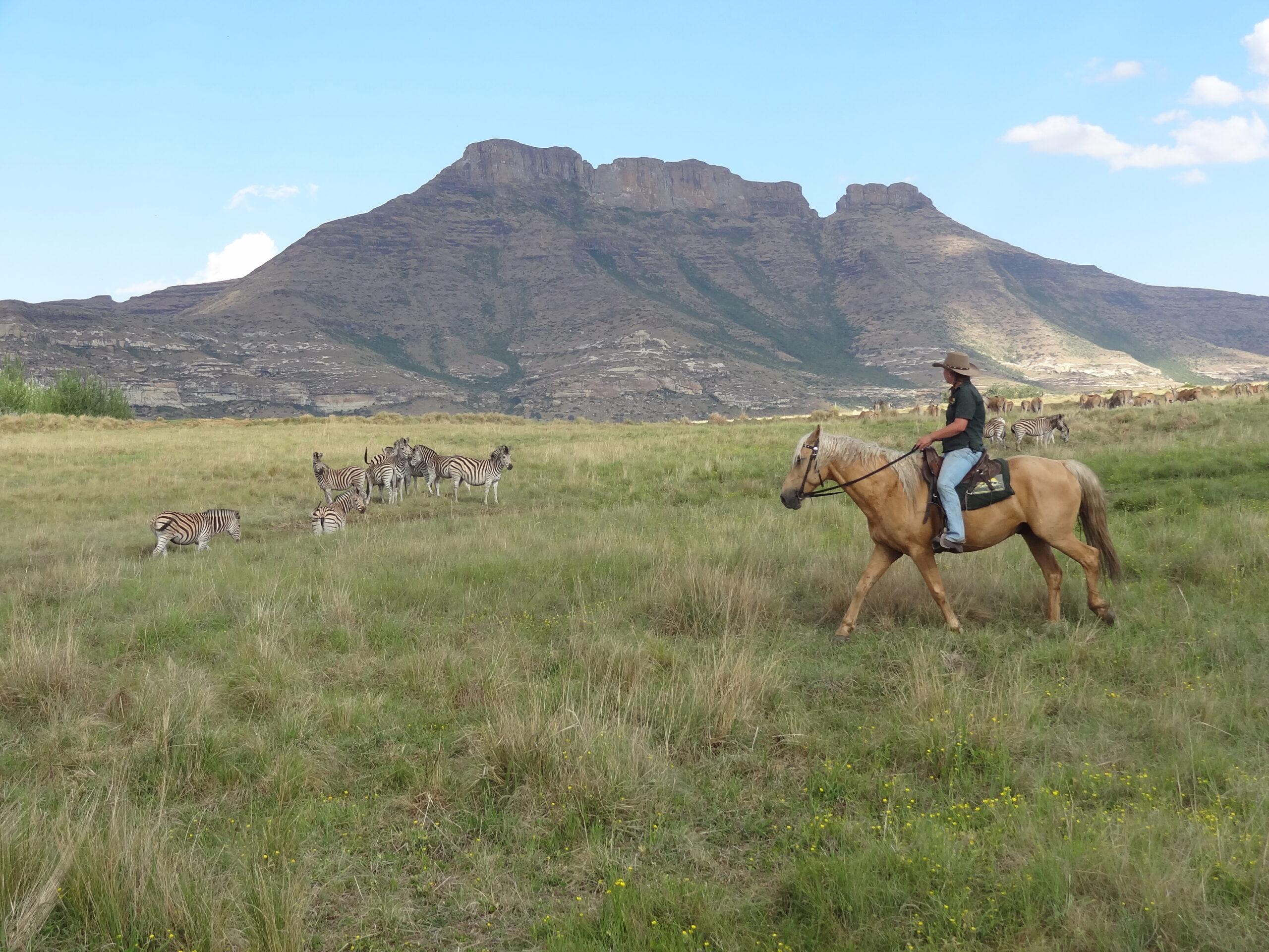 Paardrijden in Moolmanshoek / Zuid Afrika - Vakantie te paard / Reisbureau Perlan