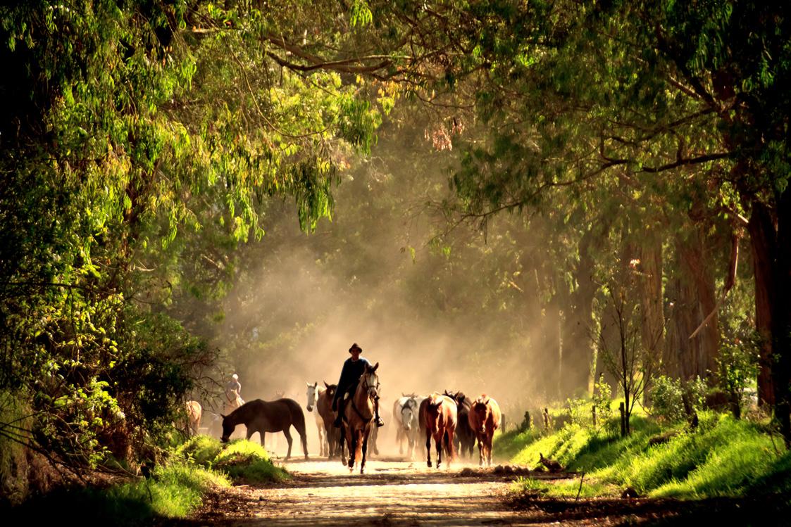 Magisch Ecuador - Vakantie te paard / Reisbureau Perlan