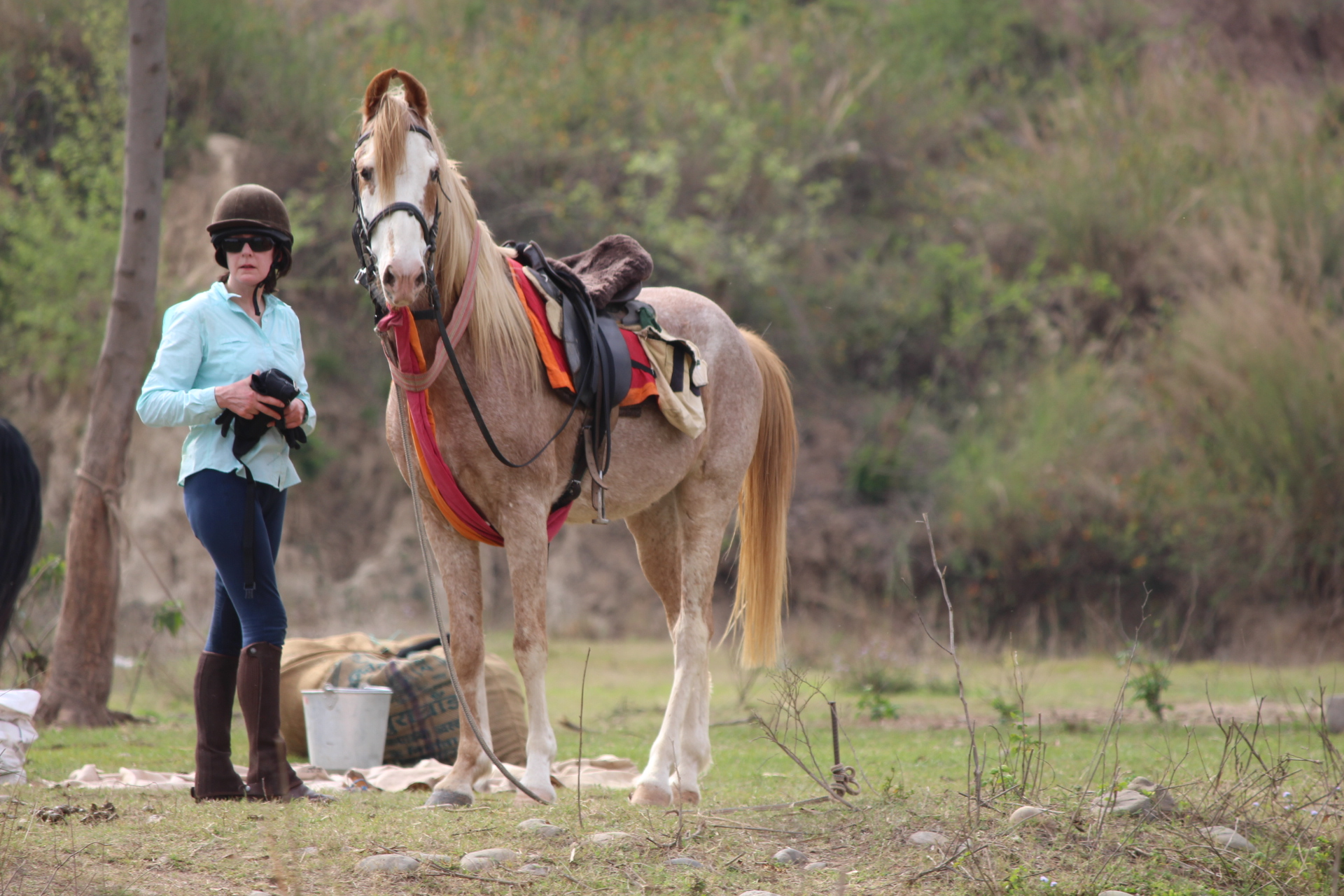 Marwari paarden in India - Vakantie te paard / Reisbureau Perlan