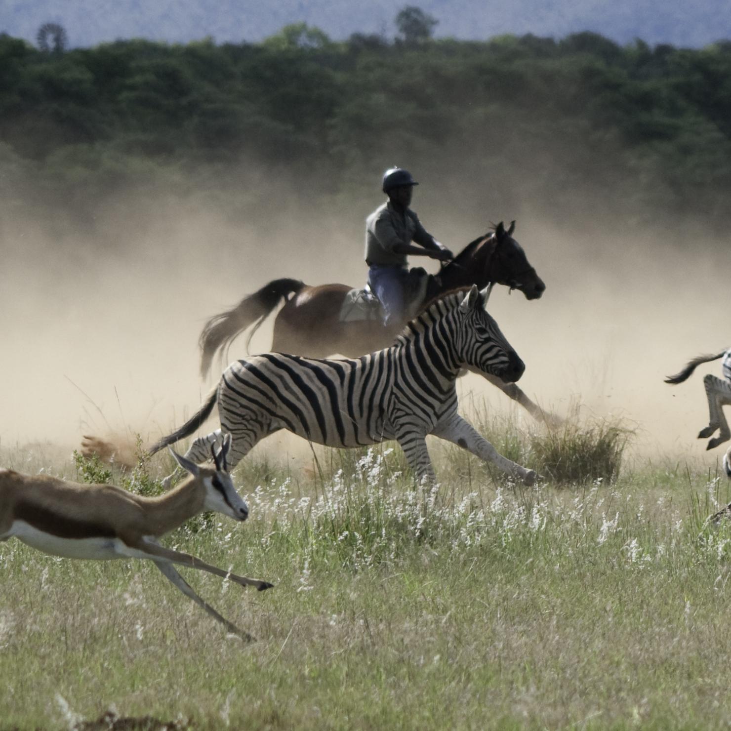 Safari te paard in Waterberg / Zuid Afrika - Vakantie te paard / Reisbureau Perlan