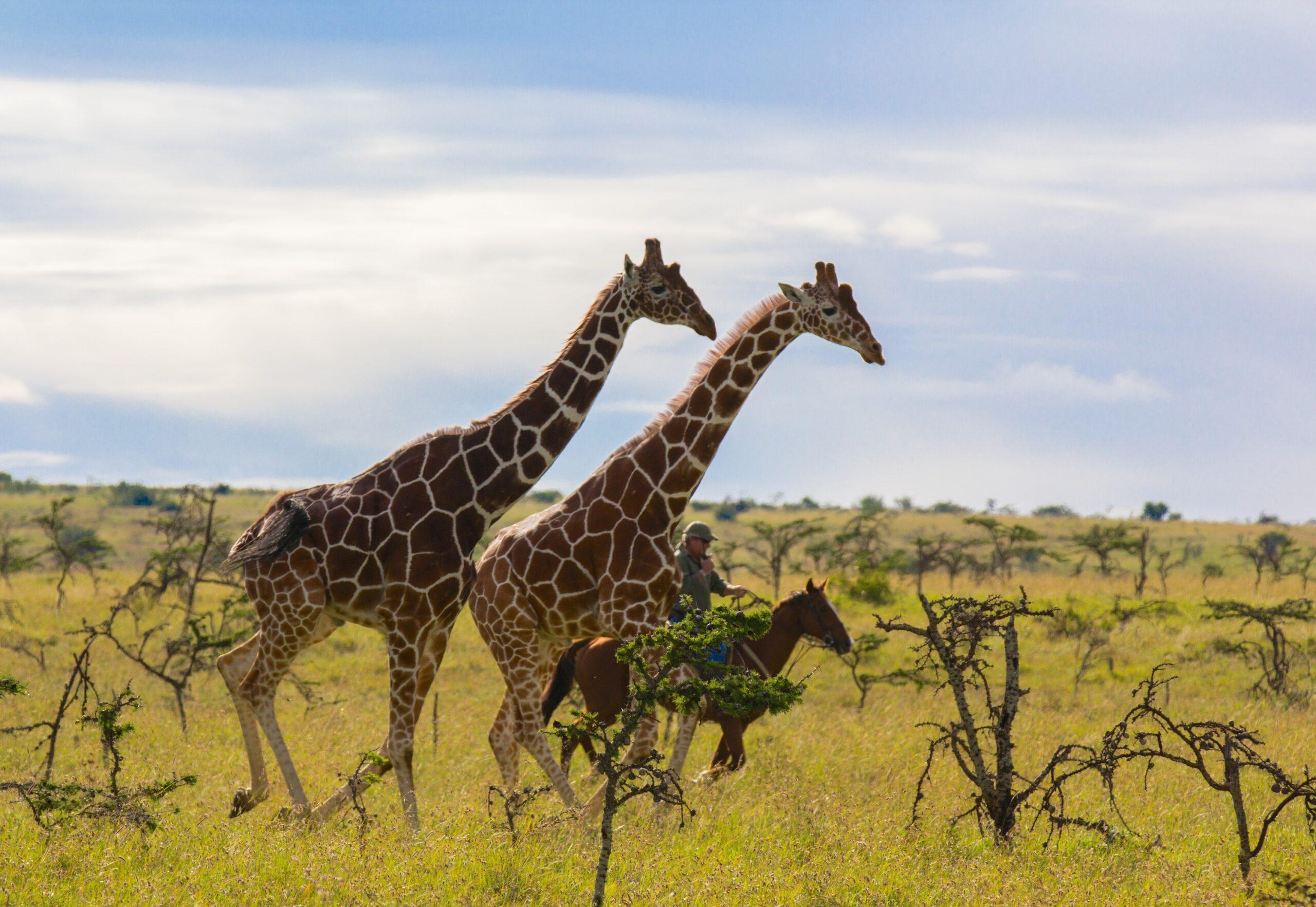 Safari te paard in Borana Lodge / Kenia - Vakantie te paard / Reisbureau Perlan