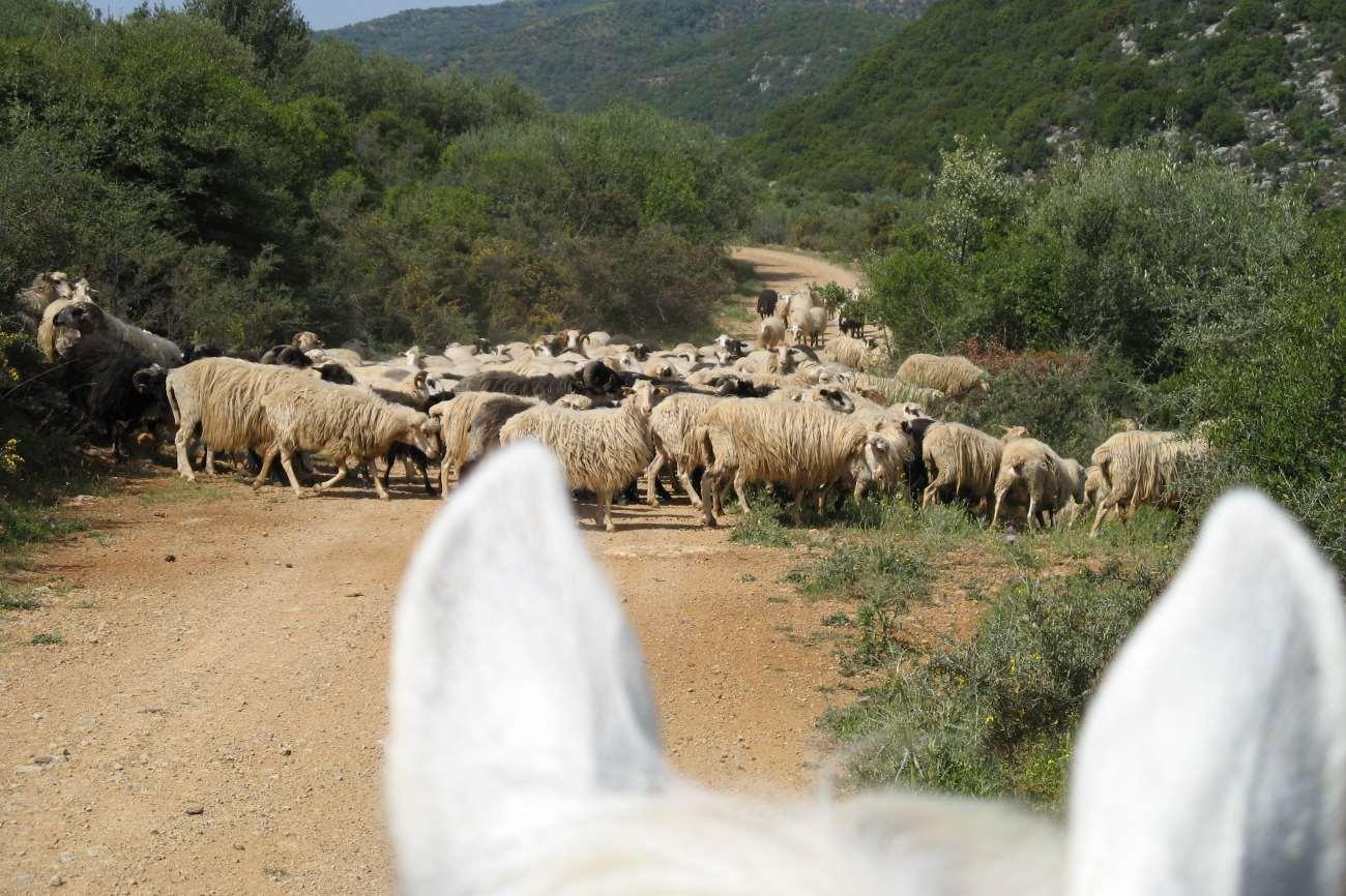 Paardrijden in Kreta - Vakantie te paard / Reisbureau Perlan