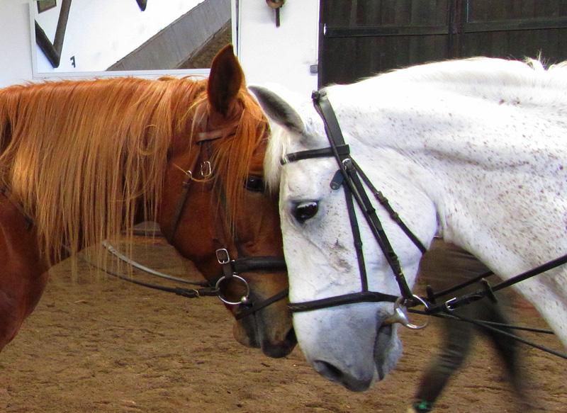 Te paard langs de Loire kastelen / Frankrijk - Vakantie te paard / Reisbureau Perlan