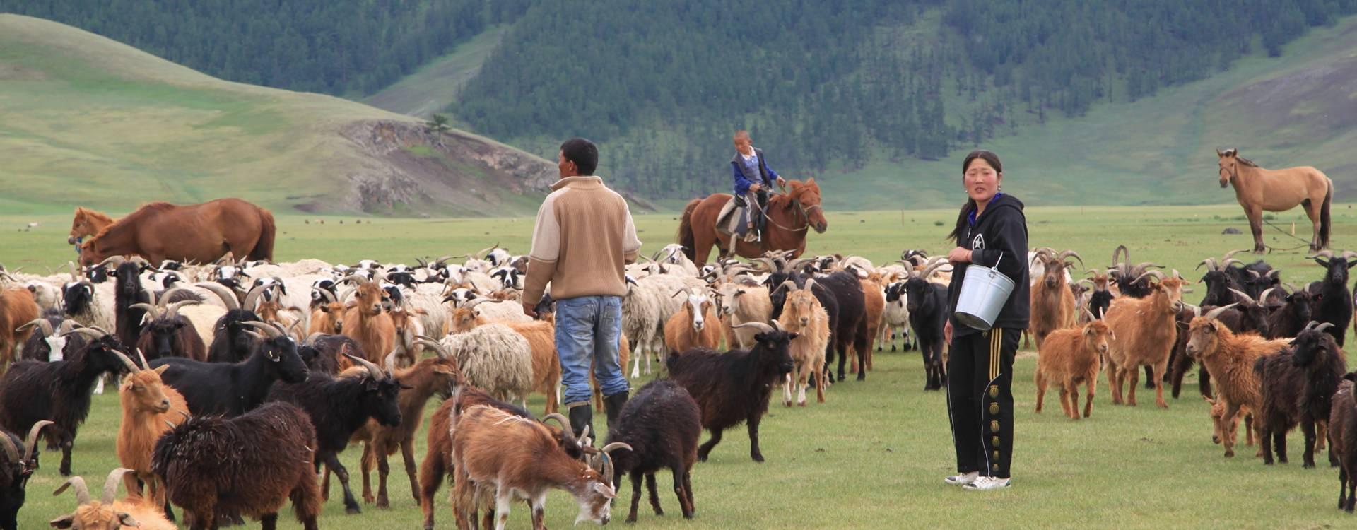 Paardrijden in Mongolië - Vakantie te paard / Reisbureau Perlan