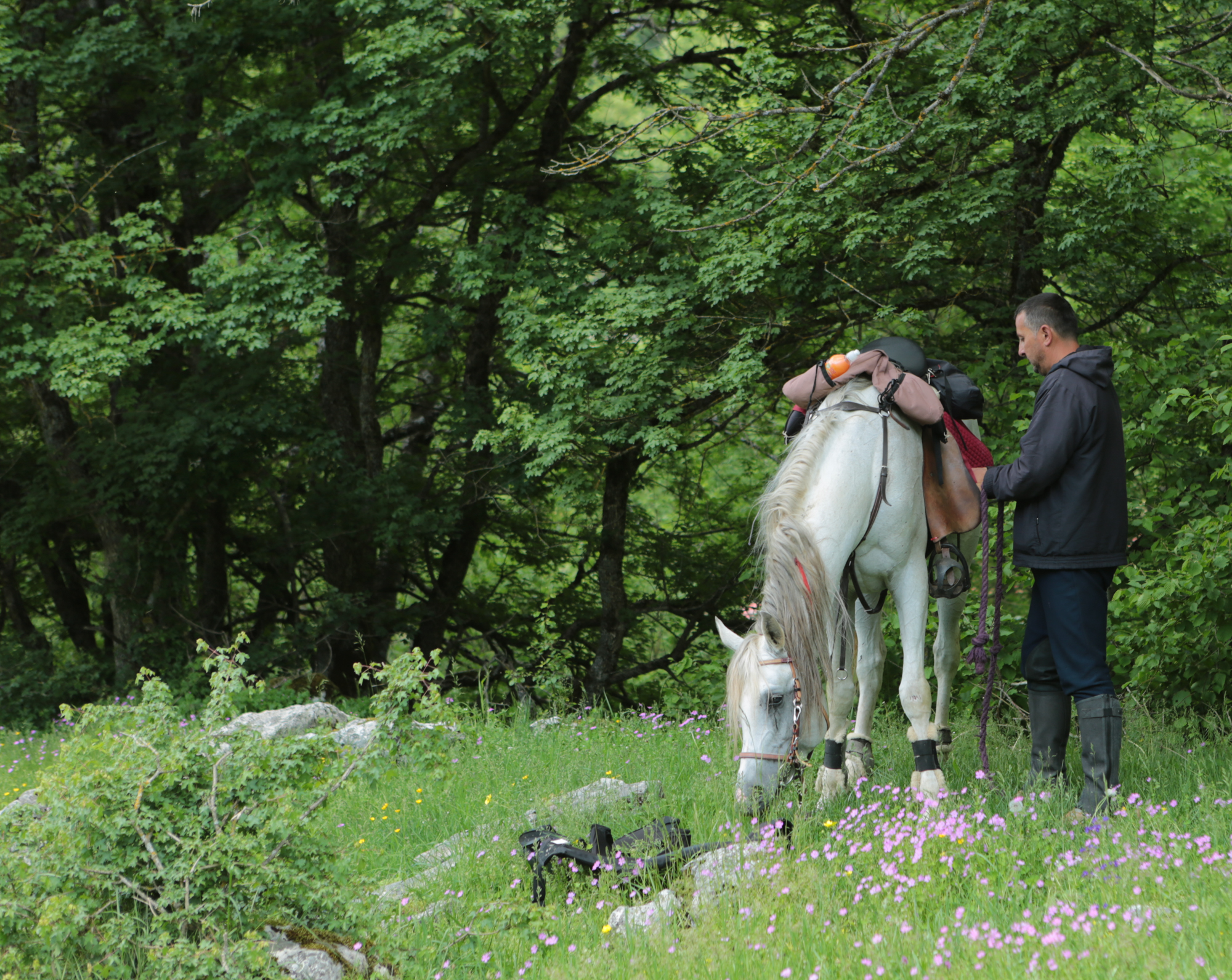 Te paard in Montenegro - Vakantie te paard / Reisbureau Perlan