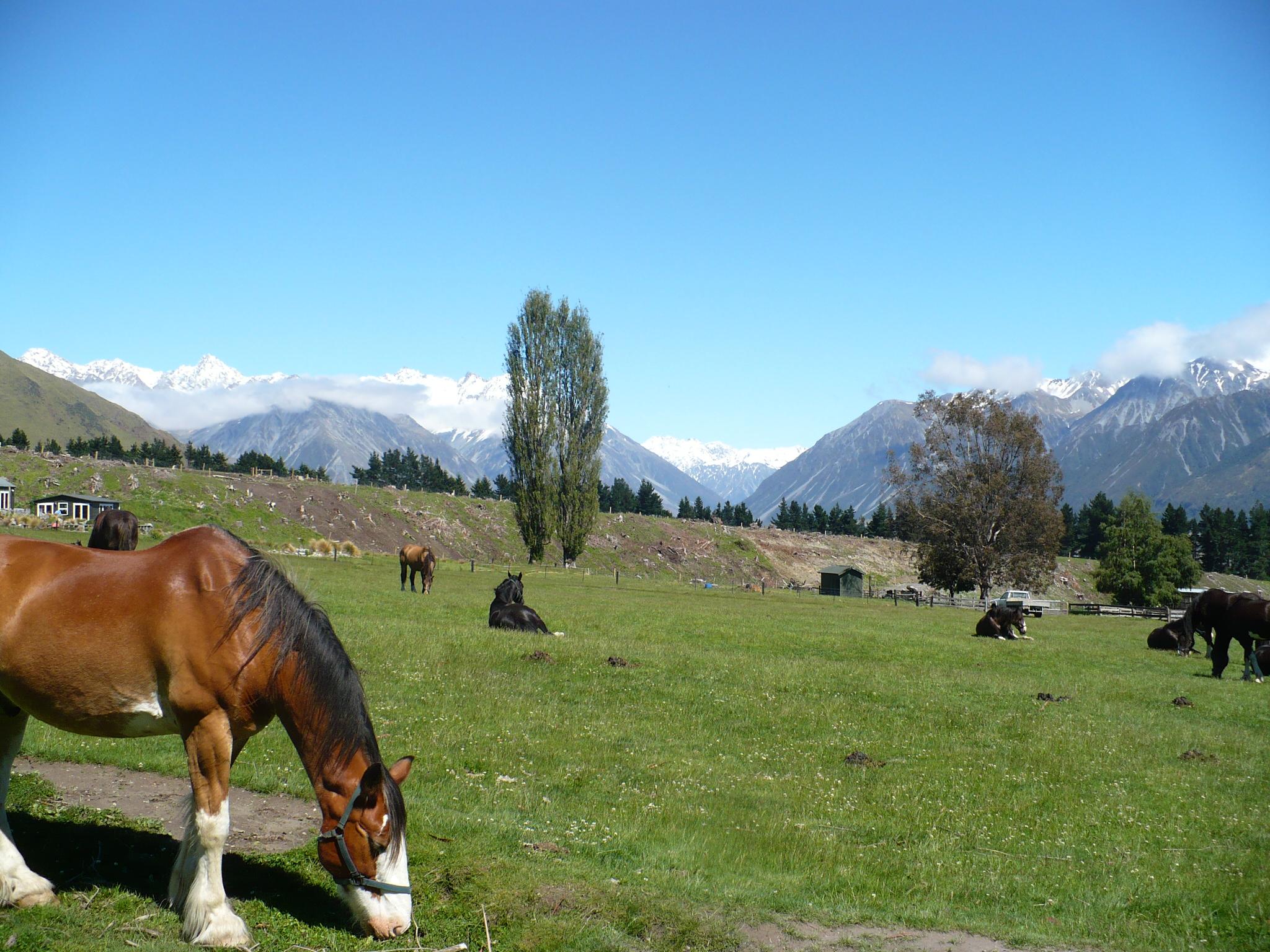 Nieuw-Zeeland te paard- Vakantie te paard / Reisbureau Perlan