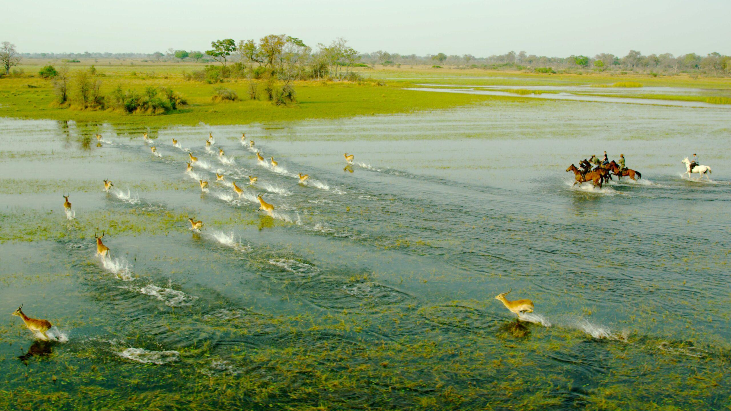 Safari te paard in Kujwana / Botswana - Vakantie te paard / Reisbureau Perlan