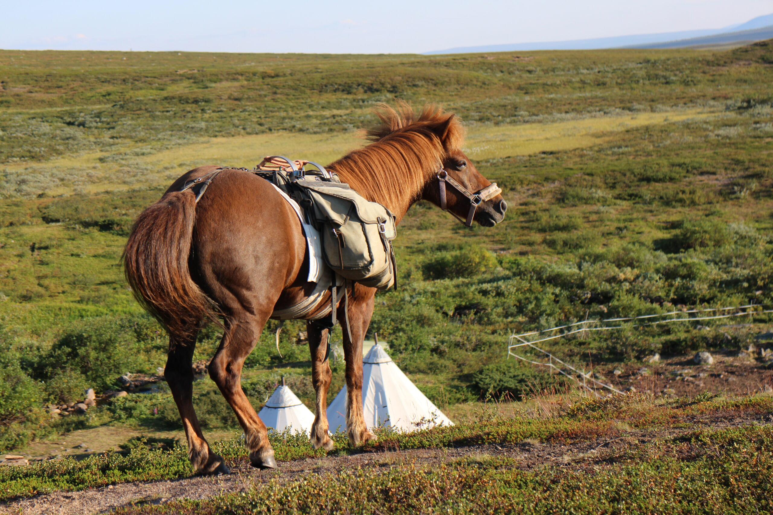 Paardrijden in Zweden - Vakantie te paard / Reisbureau Perlan