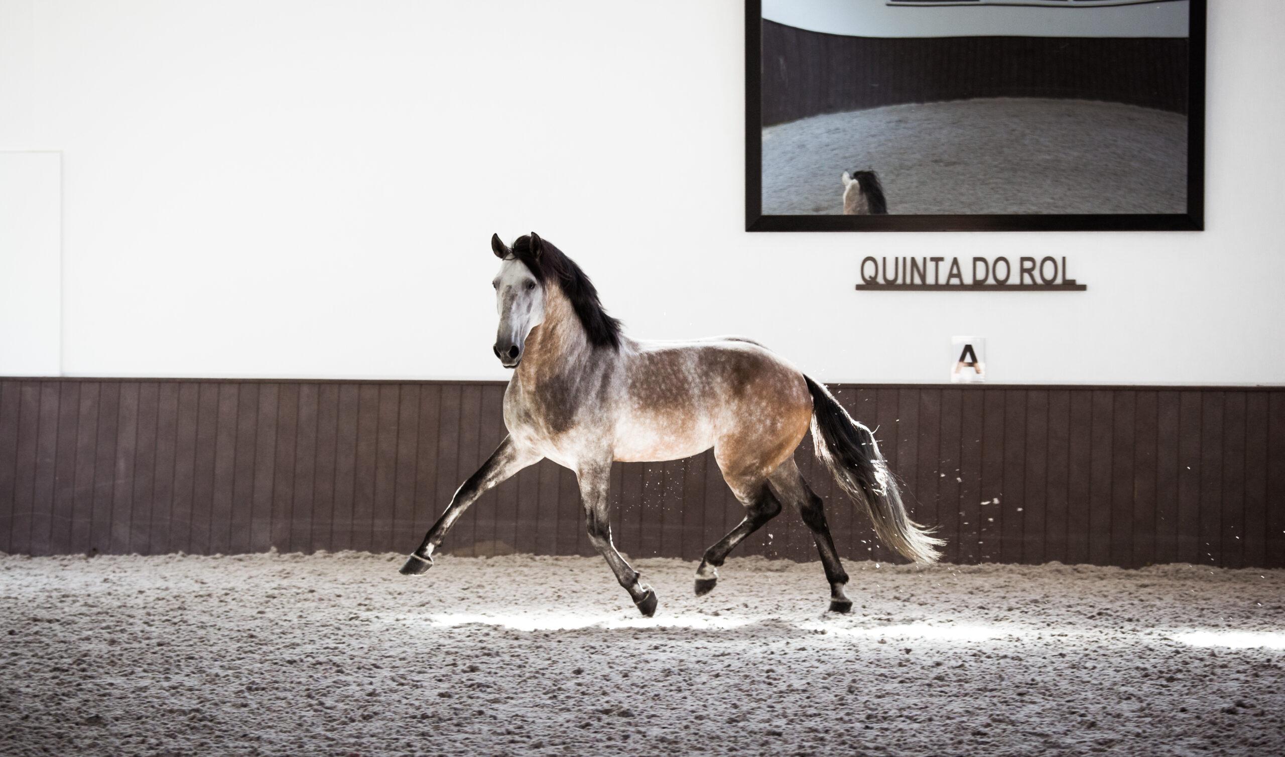 Dressuurstage in Quinta do Rol / Portugal - Vakantie te paard / Reisbureau Perlan