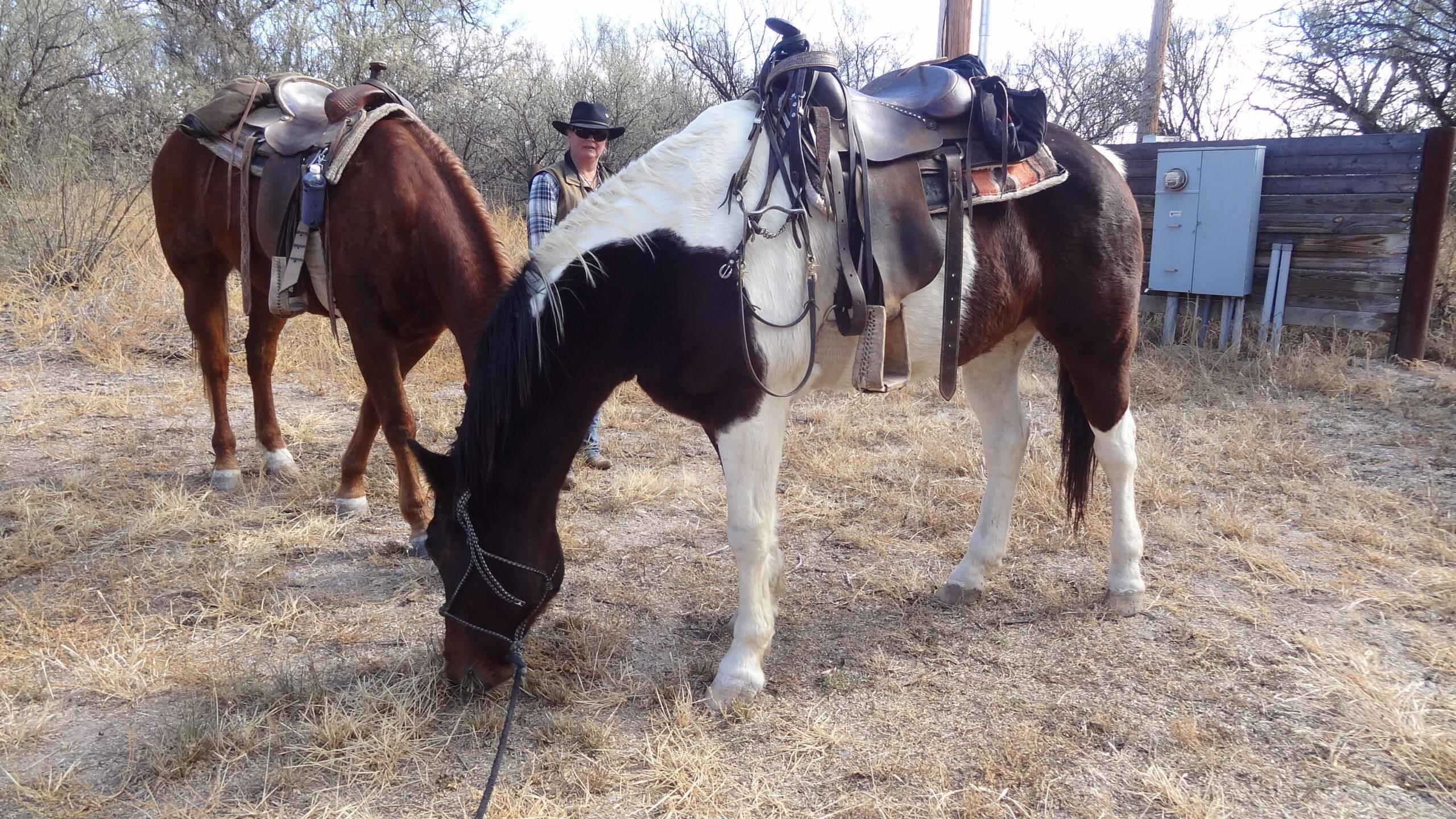 Ranchvakantie in Arizona / Verenigde Staten - Vakantie te paard / Reisbureau Perlan