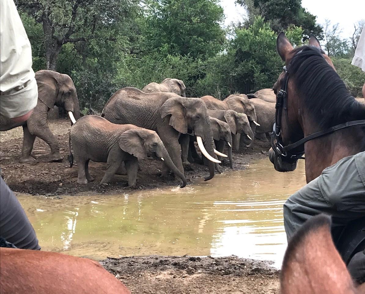 Safari te paard in Wait a Little / Zuid Afrika - Vakantie te paard / Reisbureau Perlan