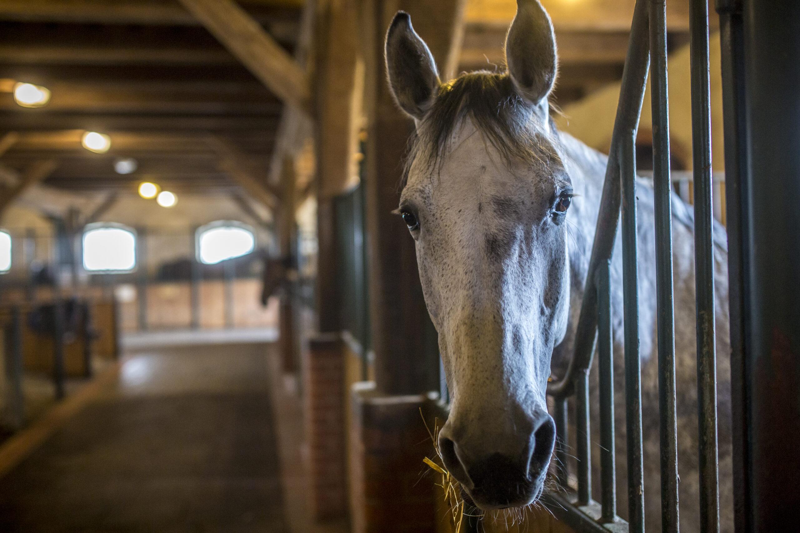 Koninklijk paardrijden in Galiny Palace Polen - Vakantie te paard / Reisbureau Perlan