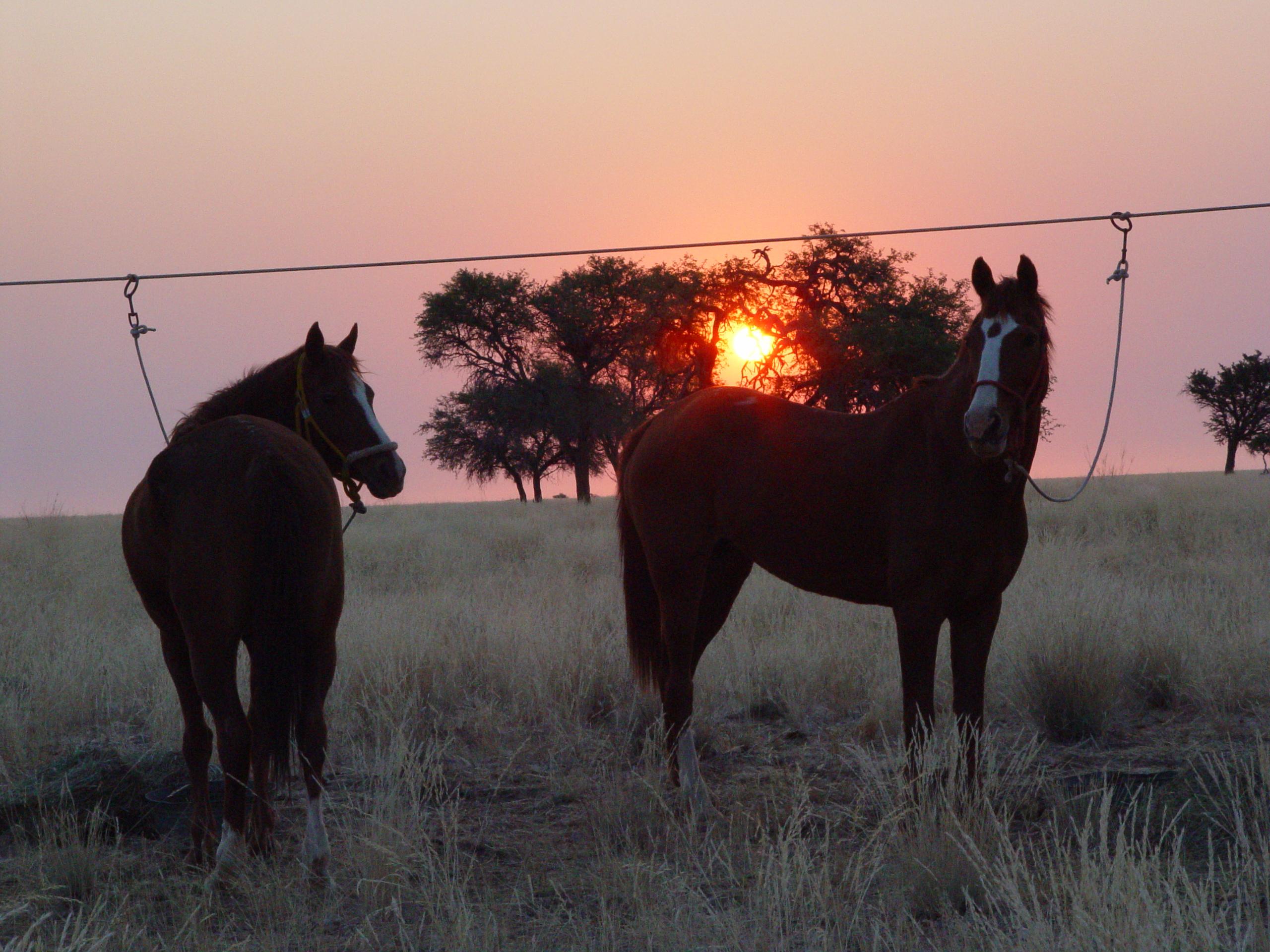 Te paard in Namibië - Vakantie te paard / Reisbureau Perlan