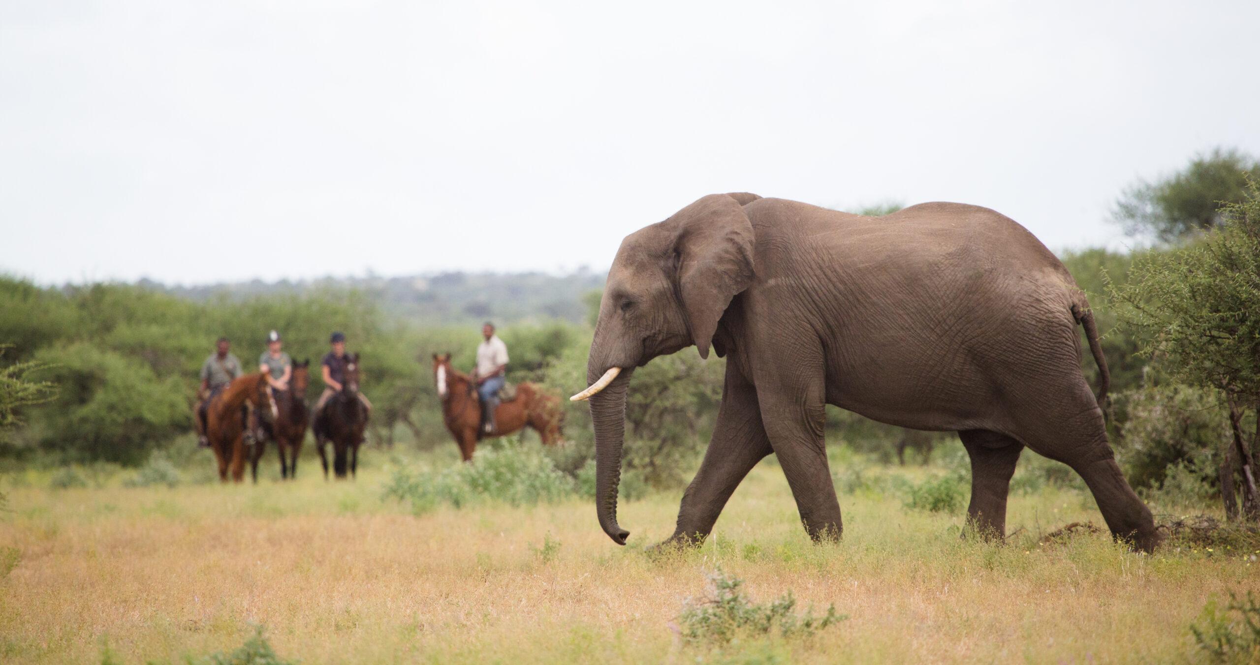 Safari te paard in de Tuli Block / Botswana - Vakantie te paard / Reisbureau Perlan