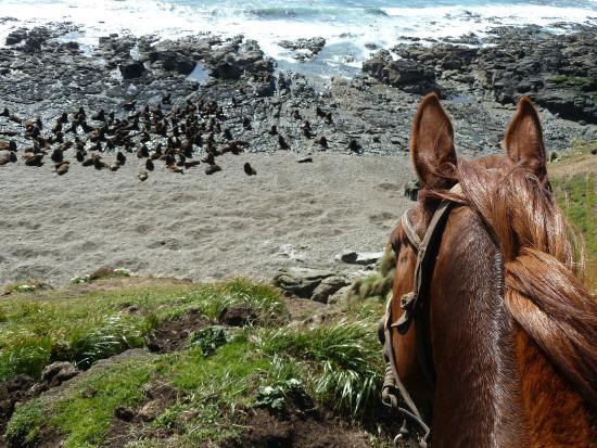 Paardrijden in Argentinië - Vakantie te paard / Reisbureau Perla