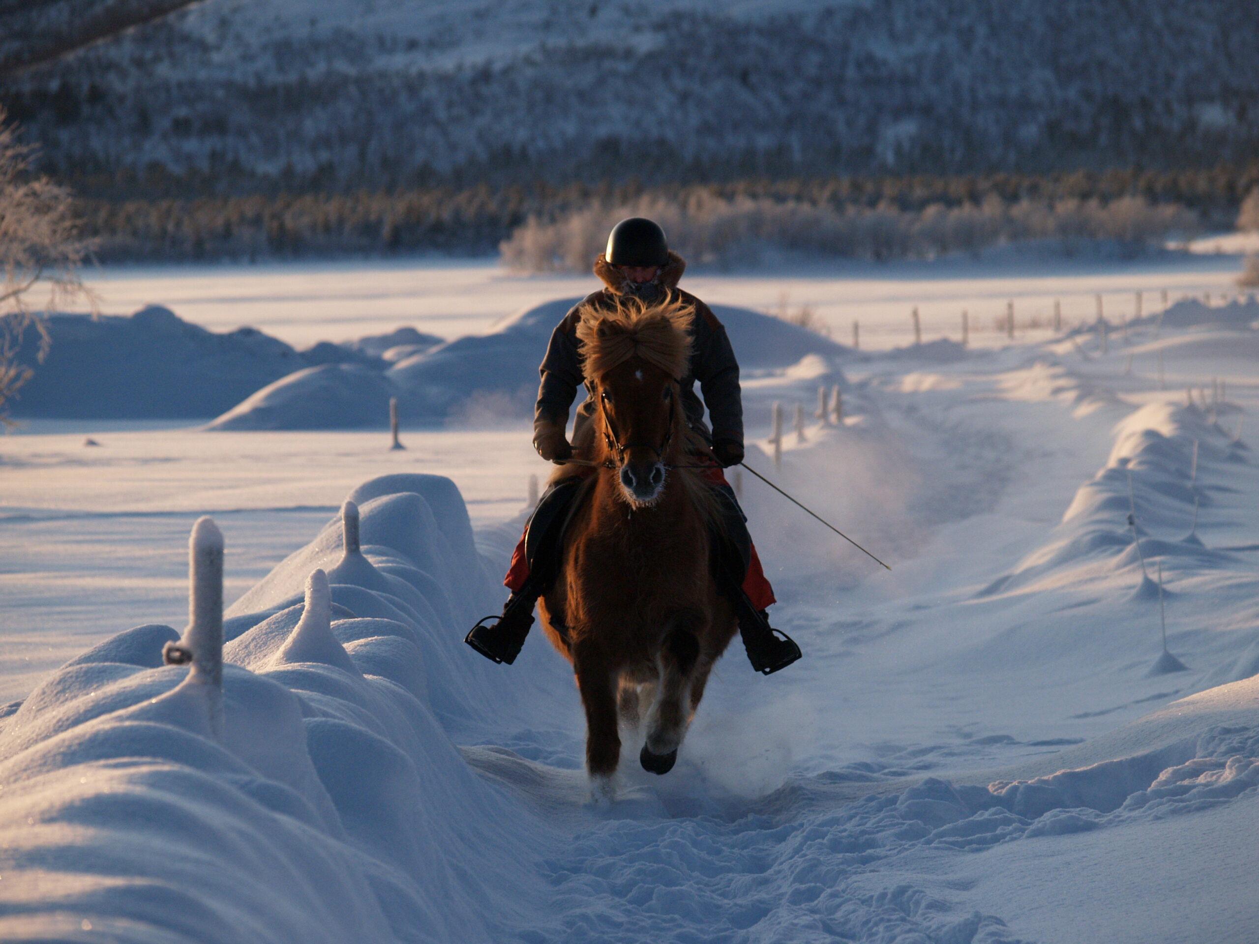 Paardrijden tijdens de winter in Zweden - Vakantie te paard / Reisbureau Perlan