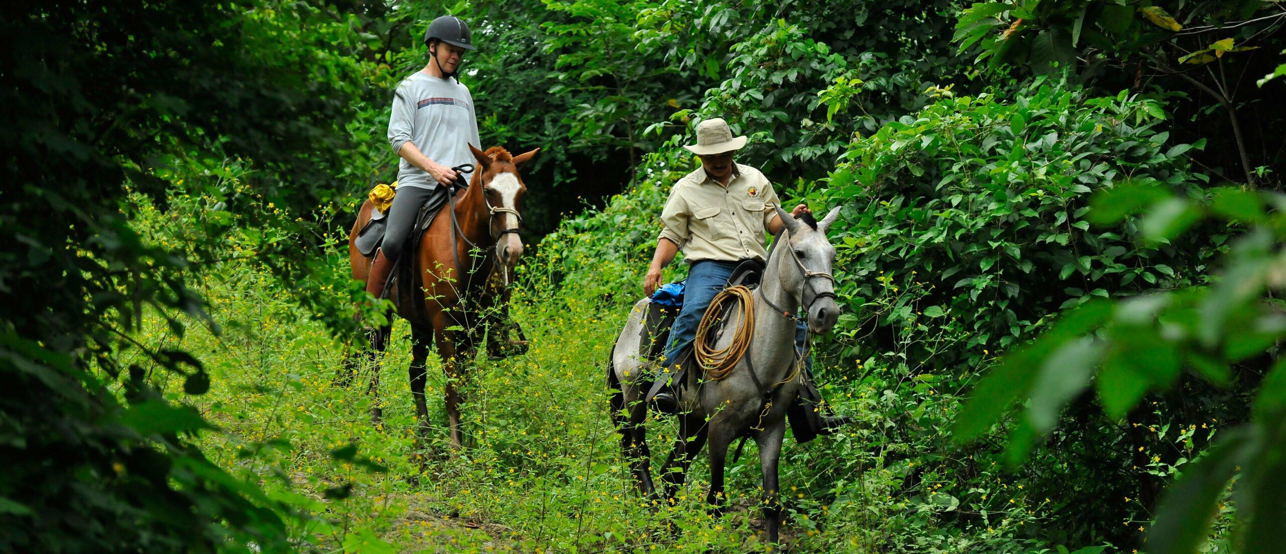 Regenwoud te paard in Costa Rica - Vakantie te paard / Reisbureau Perlan